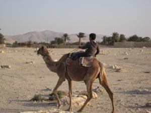 Palmyra_camel